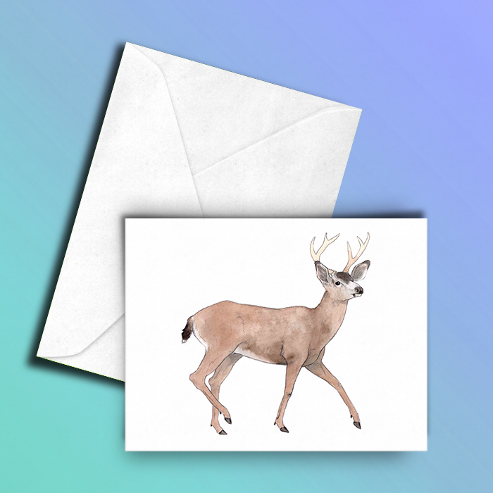 black-tailed buck card